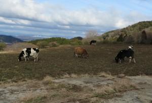 山地酪農の牧場